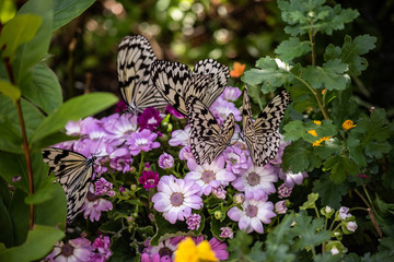 black and white butterflies on flowers