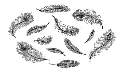 Set of black hand drawn different Peacock feather on white background. Isolated vector illustration