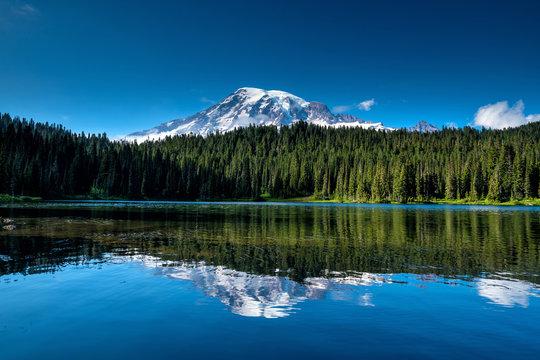 Beautiful wildflowers and Mount Rainier, Washington state