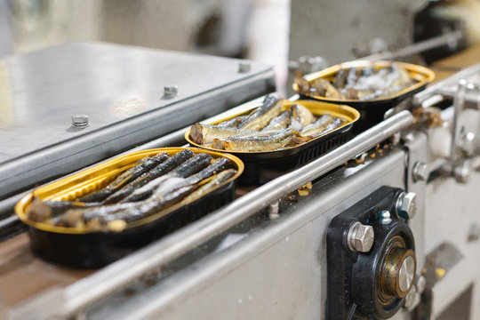 Tin cans with fish on the conveyor.