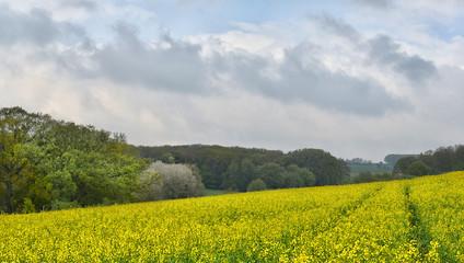 Landschaft in der Eifel im Frühling