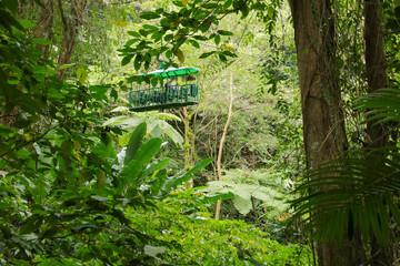 St. Lucia Tram Tour through the rainforest, Lesser Antilles