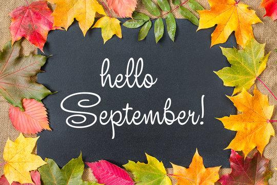 "1,295 BEST ""Hello September"" IMAGES, STOCK PHOTOS & VECTORS   Adobe Stock"