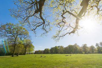 Idyllischer Park im Frühling mit Sonnenstrahlen und Lens Flare