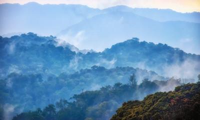 Tropical rainforest of Nyungwe National Park,Rwanda