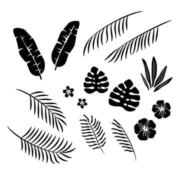 トロピカルな葉と花 シルエット