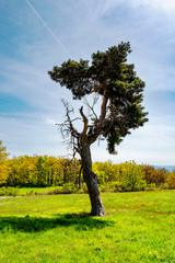 arbre seul au milieu d'un pré