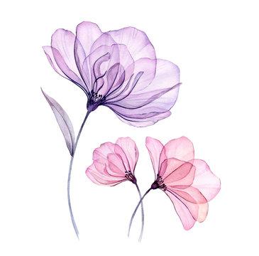 Watercolor transparent floral arrangement of roses bellflower buds leaves branches in pastel pink grey blue violet purple color vintage ornament x-ray, wedding design, stationery print, frame