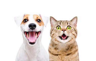 Poster Chien Portrait of cute dog Jack Russell Terrier and cheerful cat Scottish Straight isolated on white background