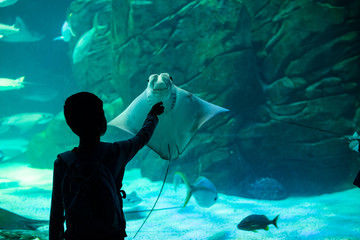 Silhouette of a boy playing with Sting Ray in an Aquarium