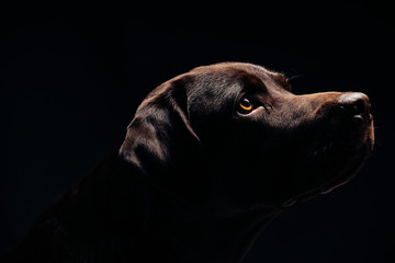 Black dog and black background Wall mural