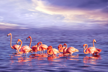 Foto auf Leinwand Flamingo A flock of beautiful pink flamingos against a purple sunset. Artistic marine tropical image.