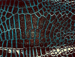 Fototapete - Dark alligator leather texture. Abstract background.