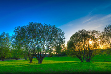 Sun sets over spring meadow on whitch grow small trees. May landscape. Masuria, Poland.