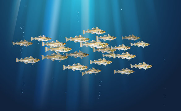 School of fish Codfish. Marine life. Cod atlantic, vector illustration with details and optimized specks to be used in packaging design, decoration, educational graphics, etc.