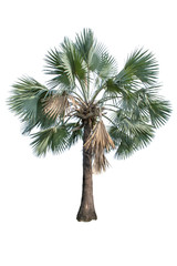 Isolated Palm trees on a white background with clipping path.