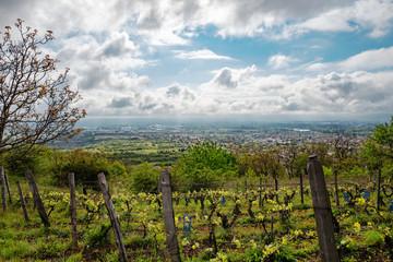 les vignes de chateaugay