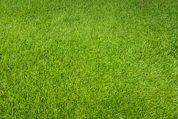 Photo sur Aluminium Herbe Green grass background and textured, Top view and detail of turf floor at soccer field.