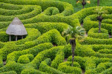 Green maze a puzzle to walk through