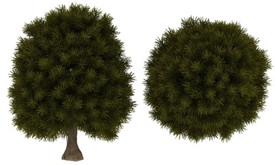 Tuinposter Palm boom Green Tree
