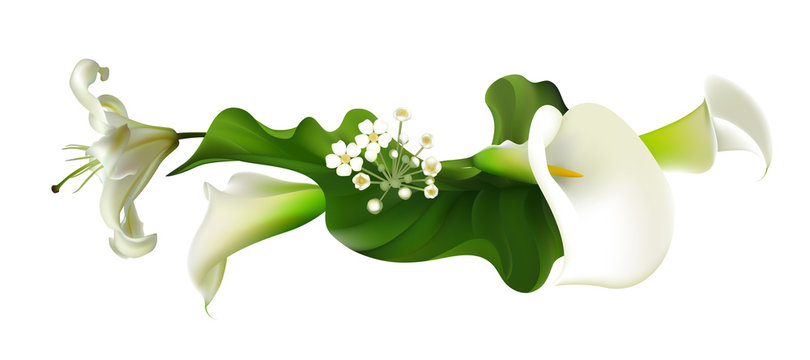 Flowers. Floral background. Callas. Green leaves. Lilies.