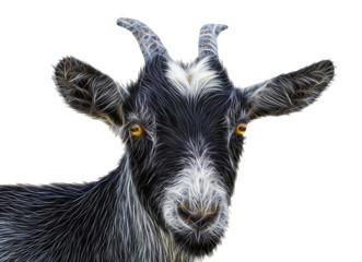 black goat on a white