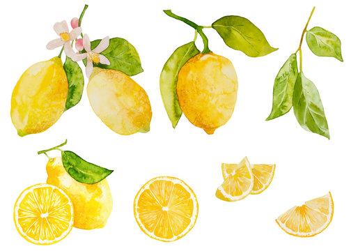 Watercolor lemon set on white background