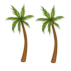 Palm tree vector illustration. Coconut tree cartoon picture