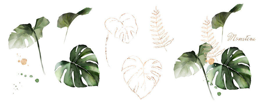 watercolor and gold leaves monstera. herbal illustration. Botanic tropic composition.  Exotic modern design
