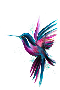 Watercolor Hummingbird flying and isolated on white background. Rainbow bird. Tropical colibri watercolor illustration.