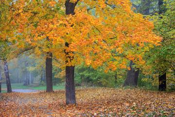 Herbstliche Stimmung am Saaleufer