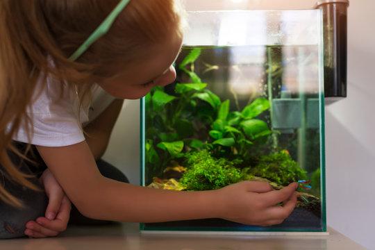 Cute little girl looking at fish in nano aquarium