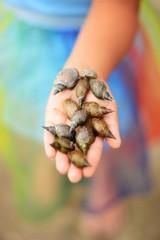 Hand Portrait Schnecken Muscheln Natur Farben Bunt Kind Hände
