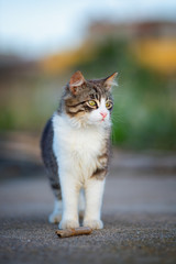 Kitten standing on outdoor, beautiful blurred background.