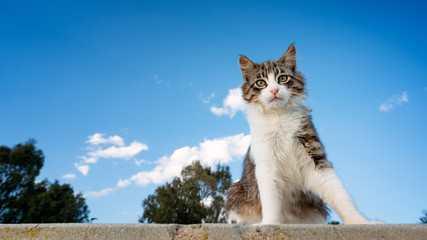 Kitten with blue sky background and left copyspace.
