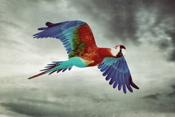Poster Geometric animals Guacamaya flying in the sky