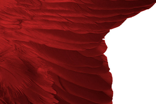 Beautiful red feather pattern texture background