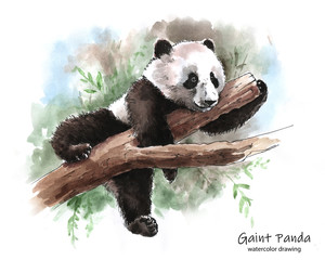 Panda lying on a tree branch, watercolor graphic
