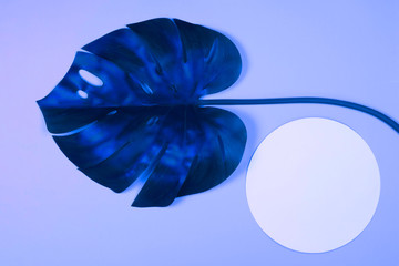 Vibrant bold blue tropical monstera leaf on blue background with copy space. Art neon surrealism concept