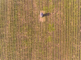 Aerial Wineyard