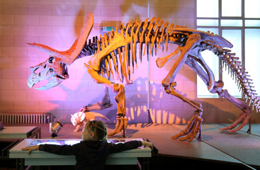 Skeletons of dinosaurs exposed at Natural Science Museum in Brussels.