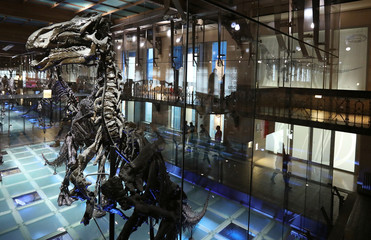 Skeletons of dinosaurs exposed at Natural Science Museum in Brussels