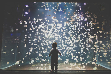 Toddler boy looking in amazement at jellyfish in an aquarium