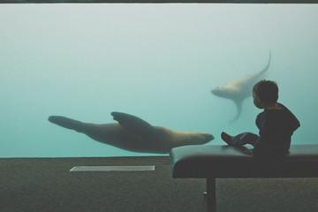 Young boy silhouetted against a Sea Lion (Otariina) tank at aquarium