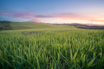 Panoramic view of beautiful endless green fields in bright sunlight, Italy Wall mural