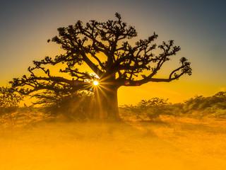 Silhouette of baobab
