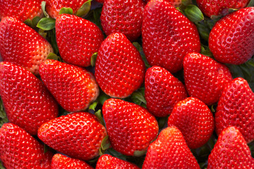 Background of freshly harvested strawberries