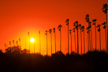 Palm trees against beautiful sunset in Los Angeles, California