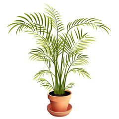 Indoor Palm Houseplant in Terra Cotta Pot Isolated on White Background