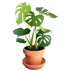 Swiss Cheese Monstera Houseplant in Terra Cotta Pot Isolated on White Background